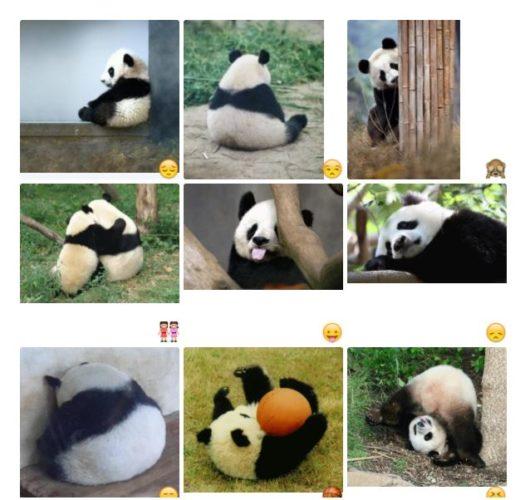 Funny Panda 😄