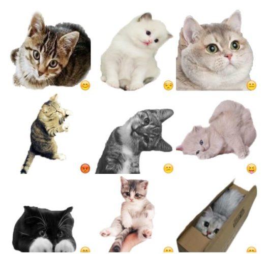 Ruru - Cats